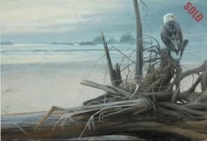 Oil painting depicting a bald eagle perched on a log on Calvert Island in the Great Bear Rainforest