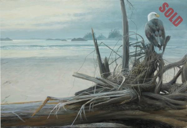 Calvert Island Eagle