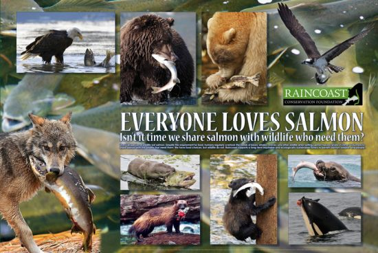 A poster depicting a number of photos where animals are eating salmon. Features eagles, bears, wolves, otters, wolverines and orcas.