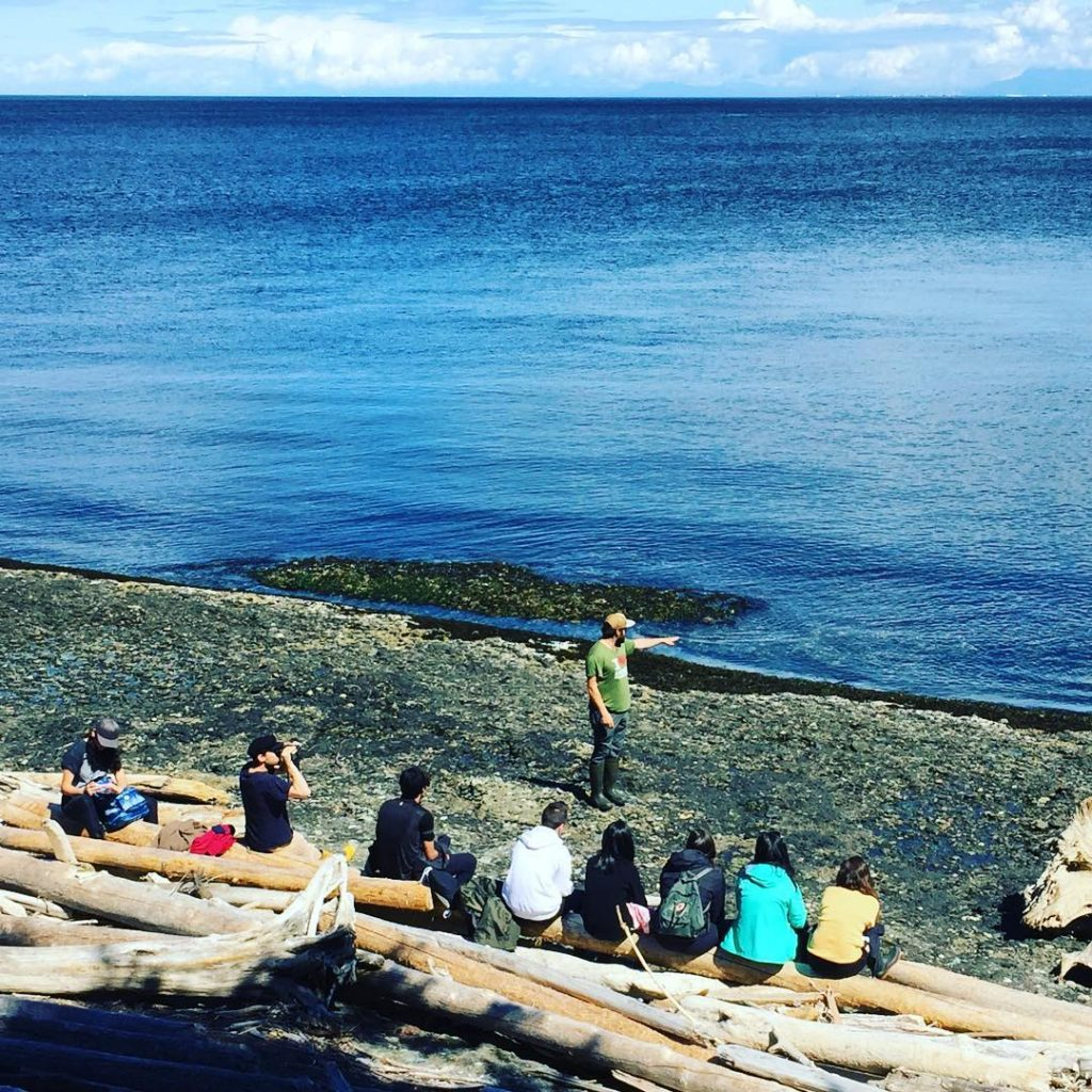 students line the beach on a blue sky day on the Salish Sea.