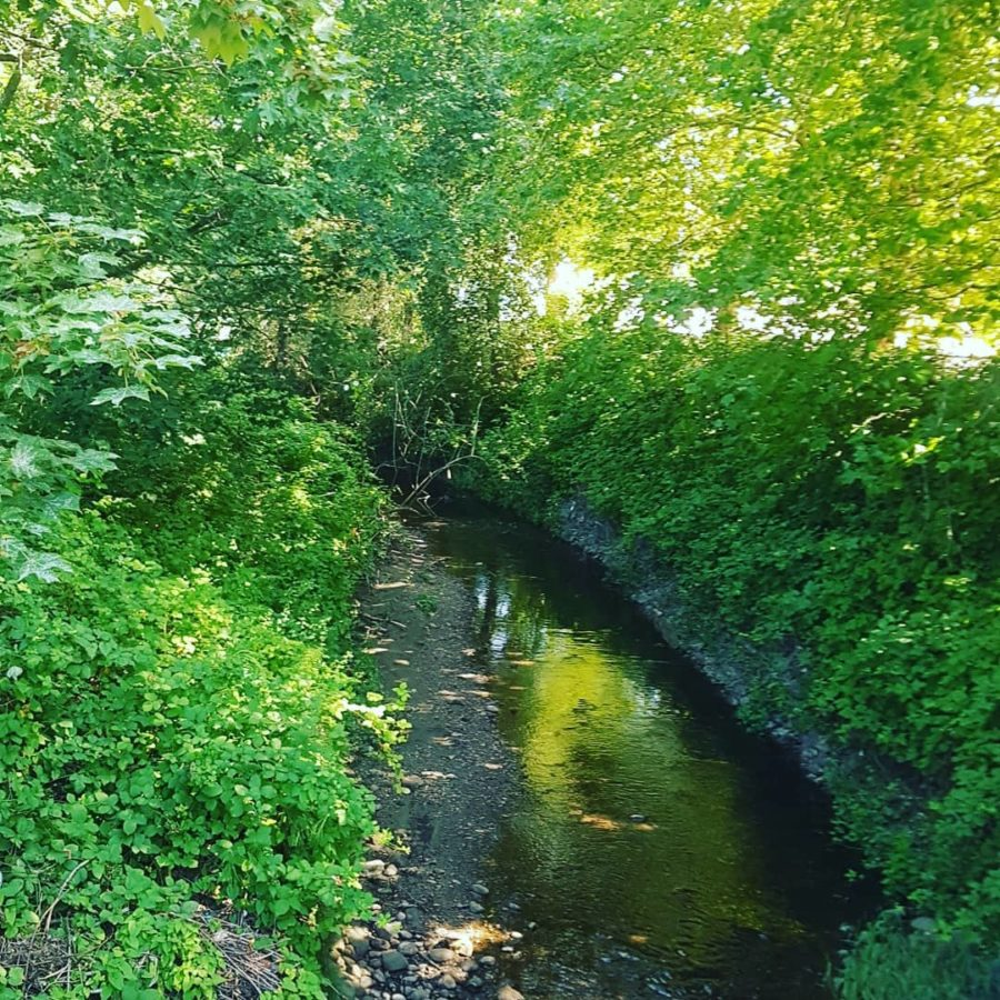 Still Creek clean up