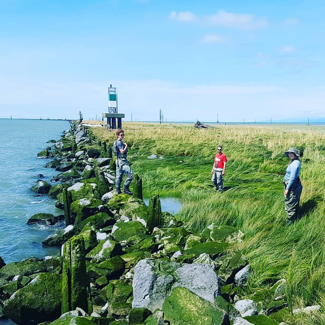 This is a photo of three researchers standing on a marshy section of the coast with algae covered rocks dividing marsh from open water. Is is a sunny day.