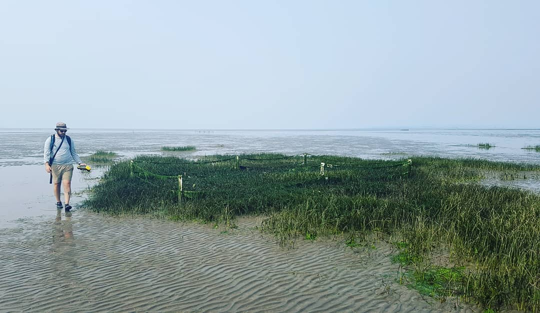 This is a photo of a beach at low tide with a patch of tall marsh-like grass, and with a bearded man walking on the left of the image holding a yellow device in his left hand. It is a grey day.