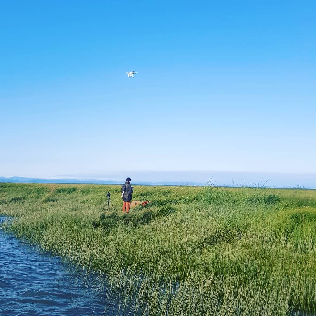 This is a photo of a researcher standing in marsh land with tall grass and a drone above his head.