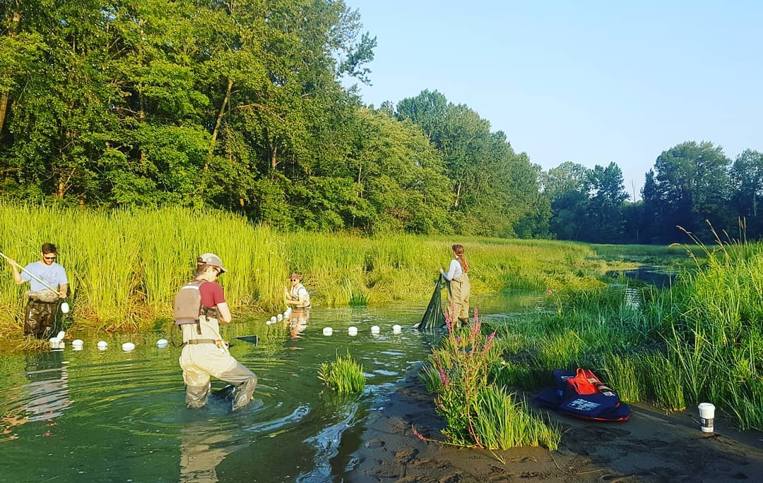 This is a photo of four researchers in an estuary, which looks marsh like and it is a sunny day.