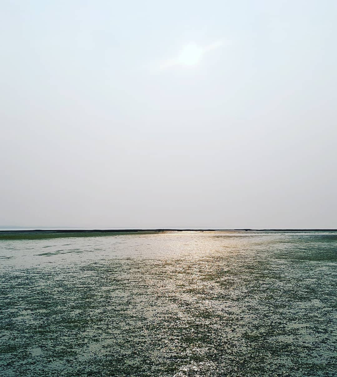 This is an image of a marshy landscape with green grass poking through the shallow water. This sun is setting, and it is a grey day.