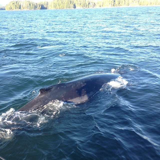 Humpbacks are one of the reasons