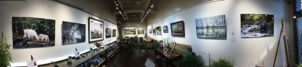 A wide-angle shot of the One Shot for Coastal Carnivores exhibit, with photographs and plants throughout the gallery space but no people.