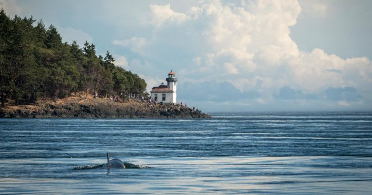 Fisheries closures needed for killer whales   Raincoast Conservation Foundation