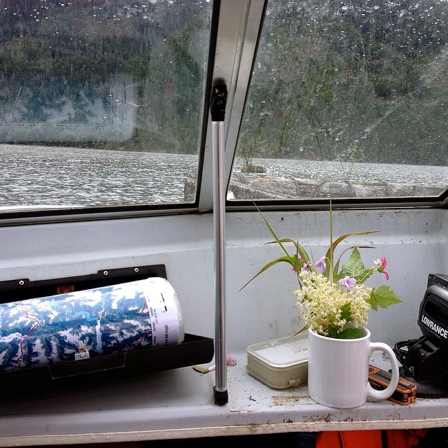 Yellow wildflowers placed in a white mug on the inside of a boat travelling on Wuikinuxv lake