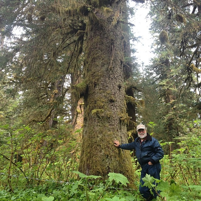 Man with a hat on stands beside a giant spruce tree in the Great Bear rainforest