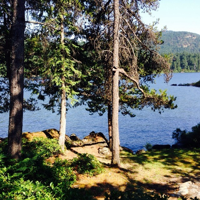 View of Shawnigan Lake blue waters through tall trees