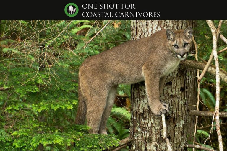 One Shot for Coastal Carnivores Feature  – Witness by Tavish Campbell