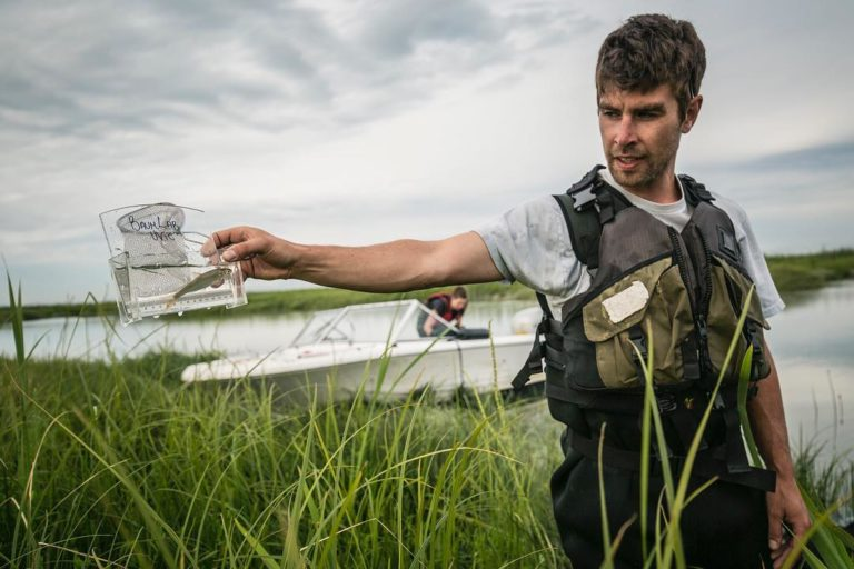 Field season for the Fraser River Estuary Connectivity project was five months long