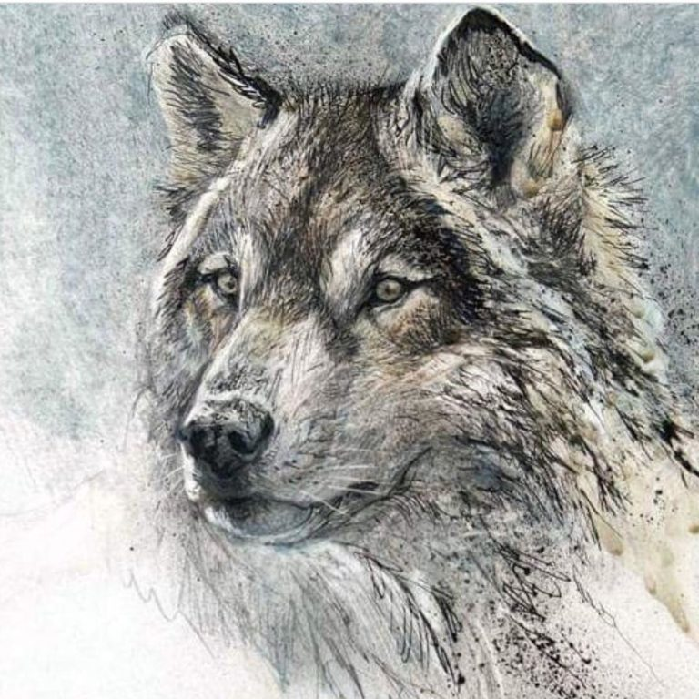 One Shot for Coastal Carnivores has now launched at the Robert Bateman Centre