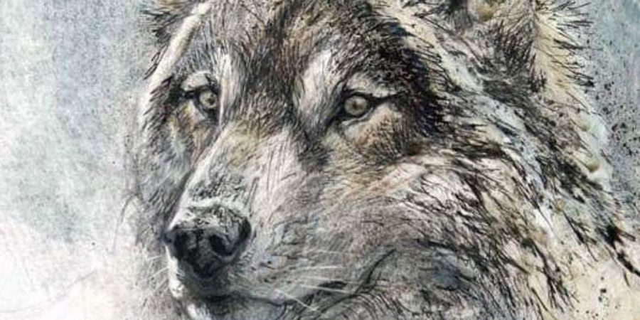 A close up wolf illustration from the Robert Bateman Centre.
