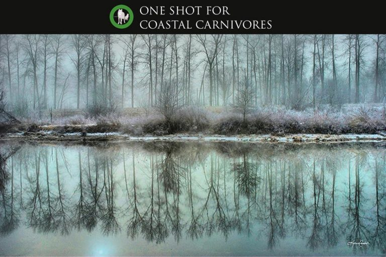 One Shot for Coastal Carnivores Feature, DoBoville Reflection by Karen Cooper