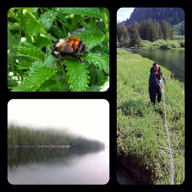 Triptych of photograpgs from the Great Bear rainforest: Photo 1 is a red bee on a green leaf, Photo 2 is water and jutting land beside it fading into mist, photo 3 is a man laying down wire to track bears on a hillside