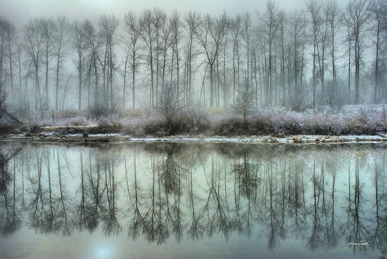 Winter photo of the dyke system in Port Coquitlam.