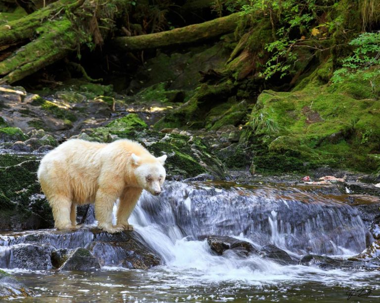 Ma'ah in the Great Bear