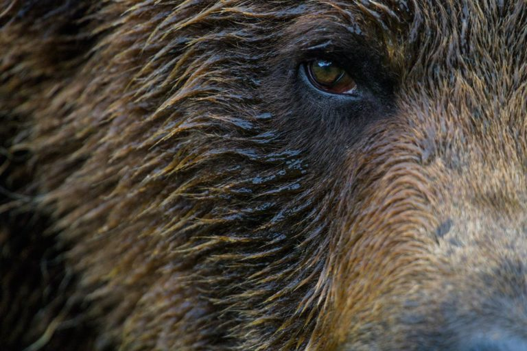 One Shot for Coastal Carnivores opens next week at Karen Cooper Gallery