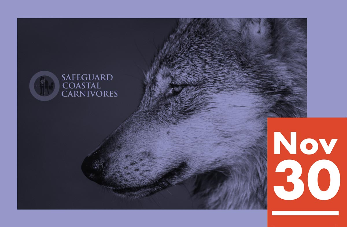 Join us to Safeguard Coastal Carnivores on November 30th at Patagonia Whistler.