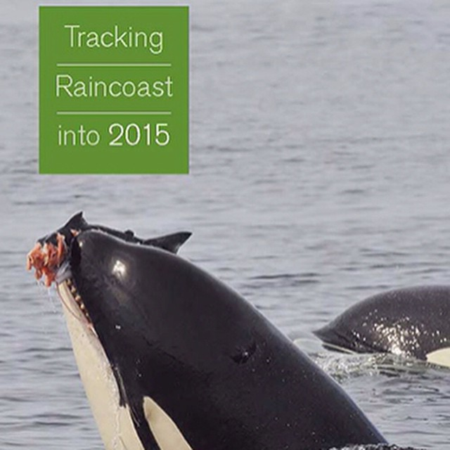 Front cover image of Raincoast Conservation's annual report Tracking Raincoast into 2015 shows an orca whale lunging out of the water with a bloodied fish in its jaws