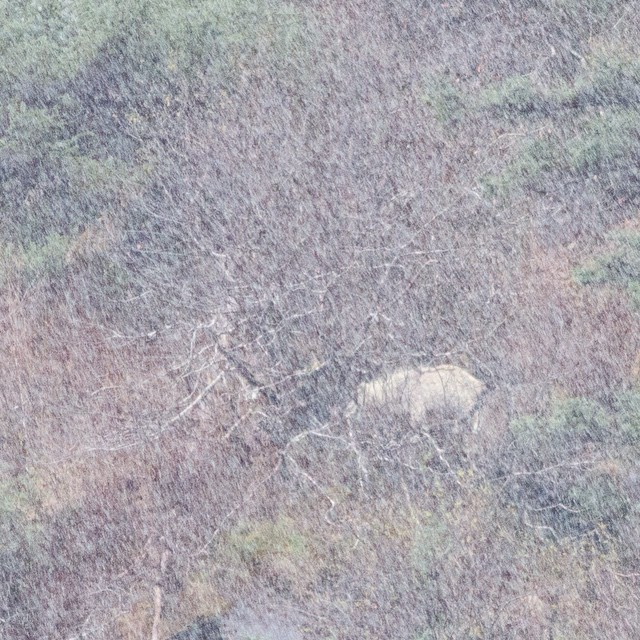 blurry image of a white mountain goat in a snow storm