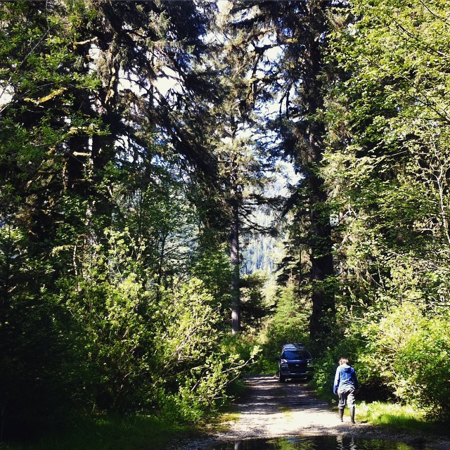 Two people walking along a broad trail uner a gigantic spruce tree in sunlight