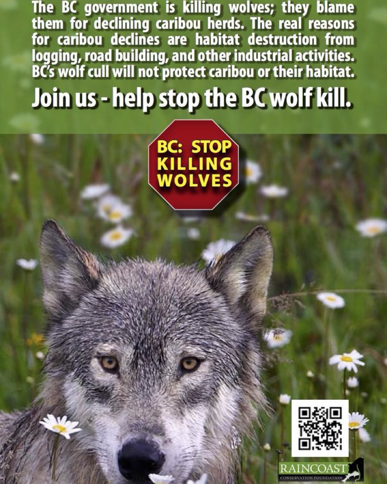 Raincoast conservation anti-wolf cull ad
