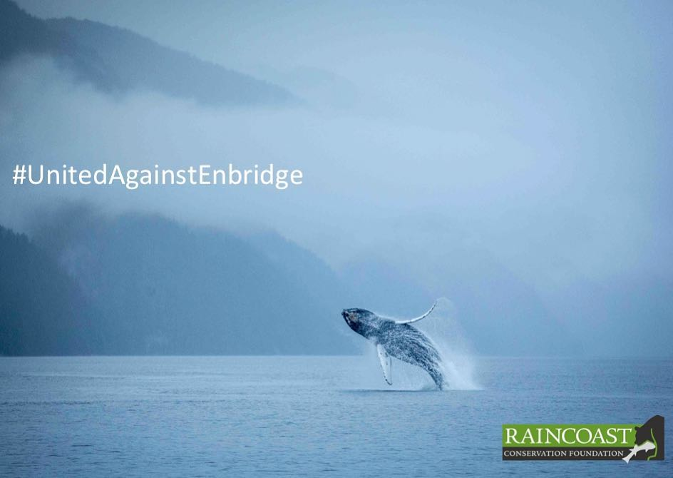 Picture of a humpback whale breaching fully out of the ocean with misty mountains as backdrop and the caption United Against Enbridge