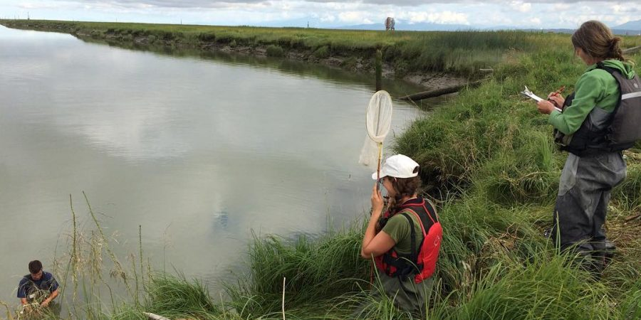 Raincoast staff member stands on the banks of the Fraser River estuary with a net