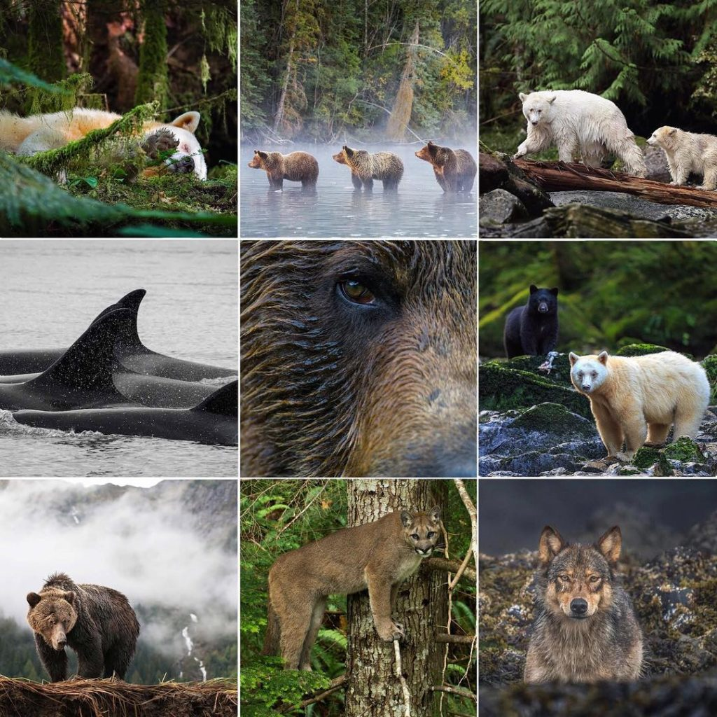 A collage of nine favourite and most popular wildlife conservation photos of 2018.