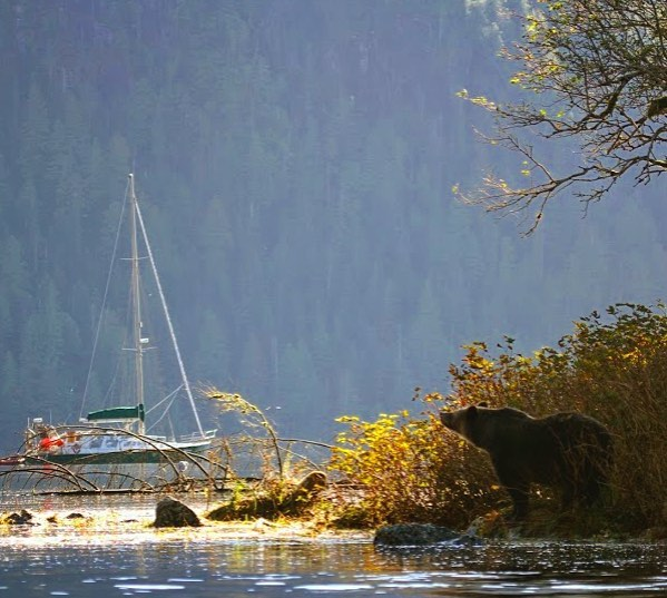 Photo of a boat anchored in the water, while a grizzly bear watches from the shore