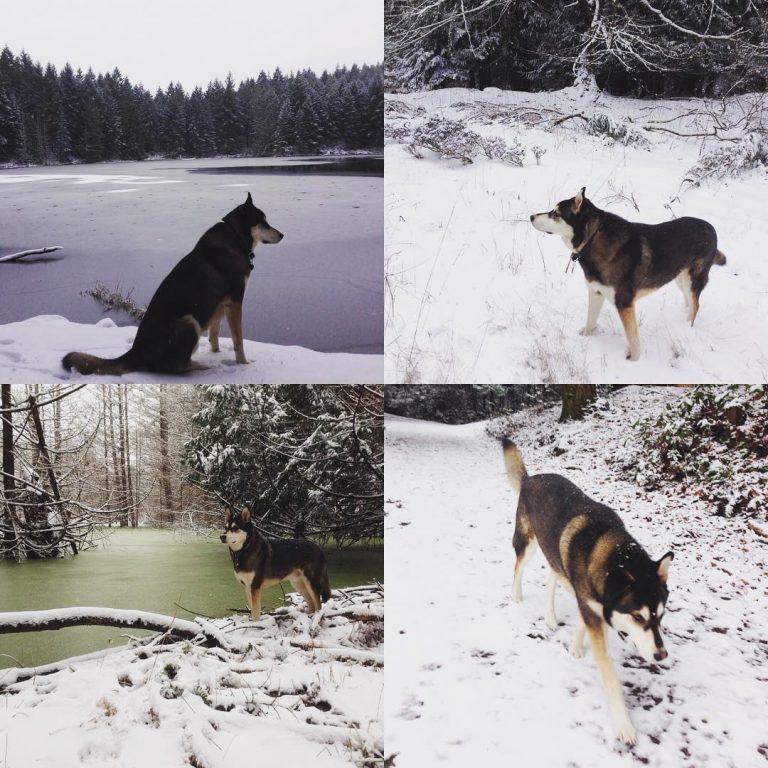 Snow day for the Raincoast dog