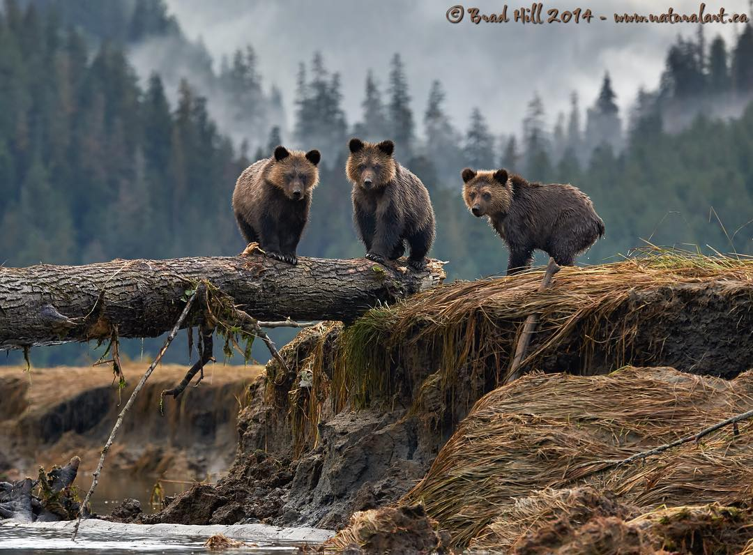 Raincoast and wildlife photographers