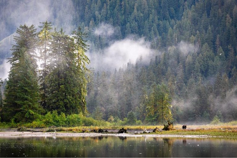 Brian Falconer on CFAX 1070 today at 2:30pm to discuss BC Liberals's plan to privatize wildlife management