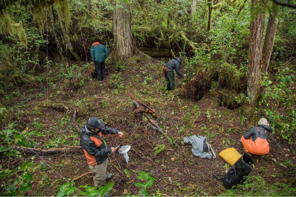 Raincoast staff work in the great bear rainforest with bear hair samples
