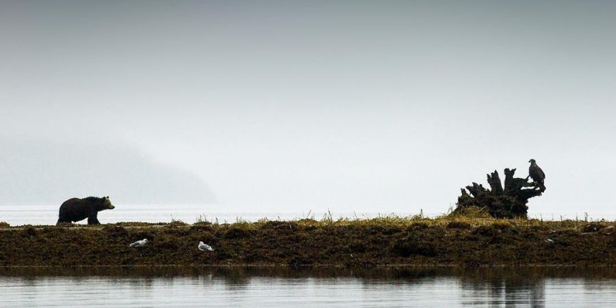 calm ocean and seagulls on the shore during a grey morning