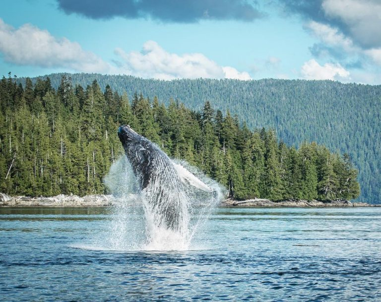 Hotspots for marine mammals and conservation