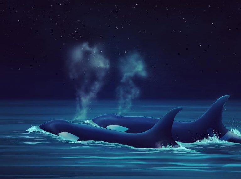 Challenging the Canadian federal government in court to save killer whales