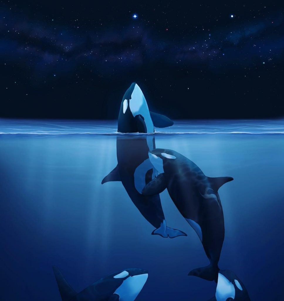 A painting that looks like a photograph of two orca whales almost hugging half out of the water