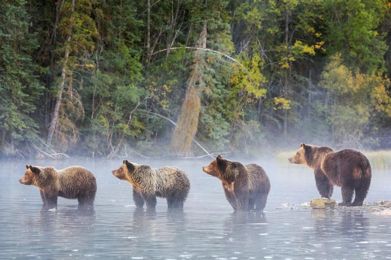 Tall Tales, Long Lenses and Conservation, at Capilano University tonight
