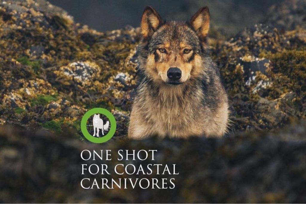 A wolf looks out onto the camera while text displays at the bottom One Shot for Coastal Carnivores