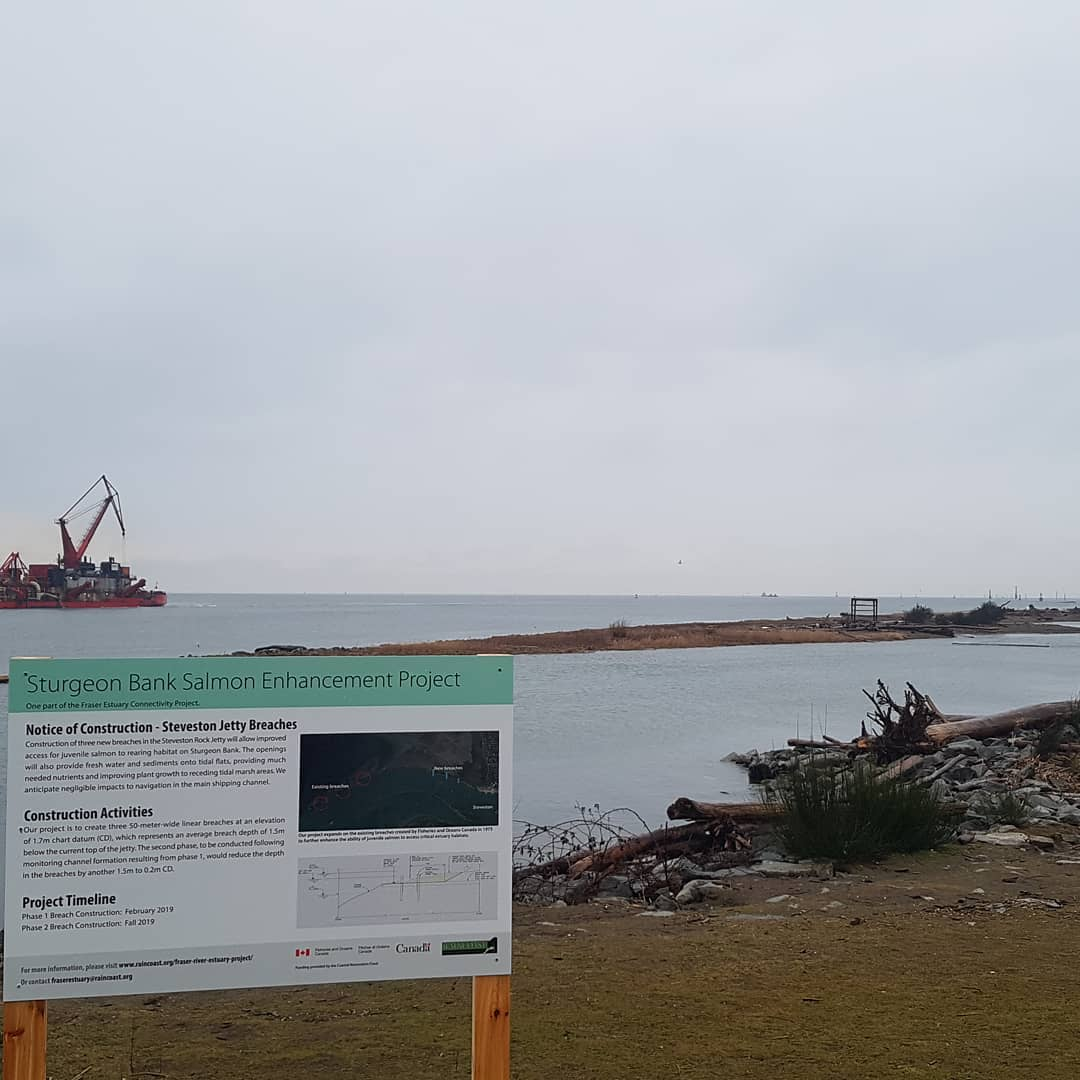 Fraser Connectivity Project: Steveston Jetty