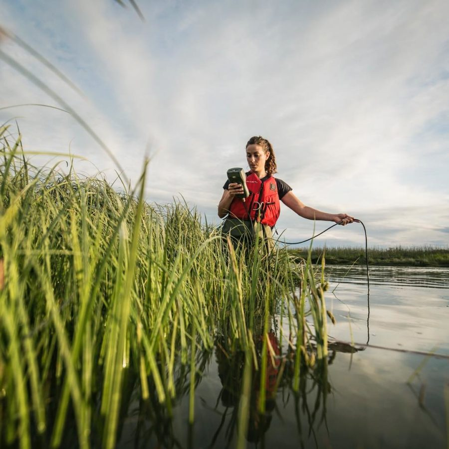 Looking up through green blades of grass, which are in the water, at a woman in an orange vest holding a line out into the water and looking at a device in her hand. The sky is blue and cloudy.