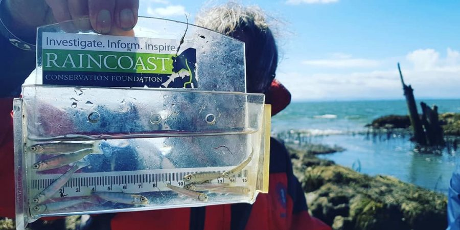 Misty MacDuffee holds up a measuring device with many little salmon inside.
