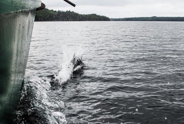 Follow the porpoise