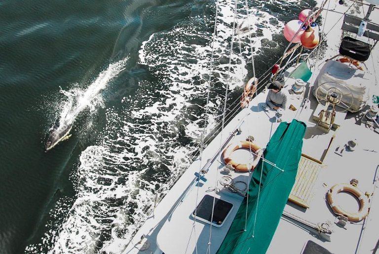 Sailing partners
