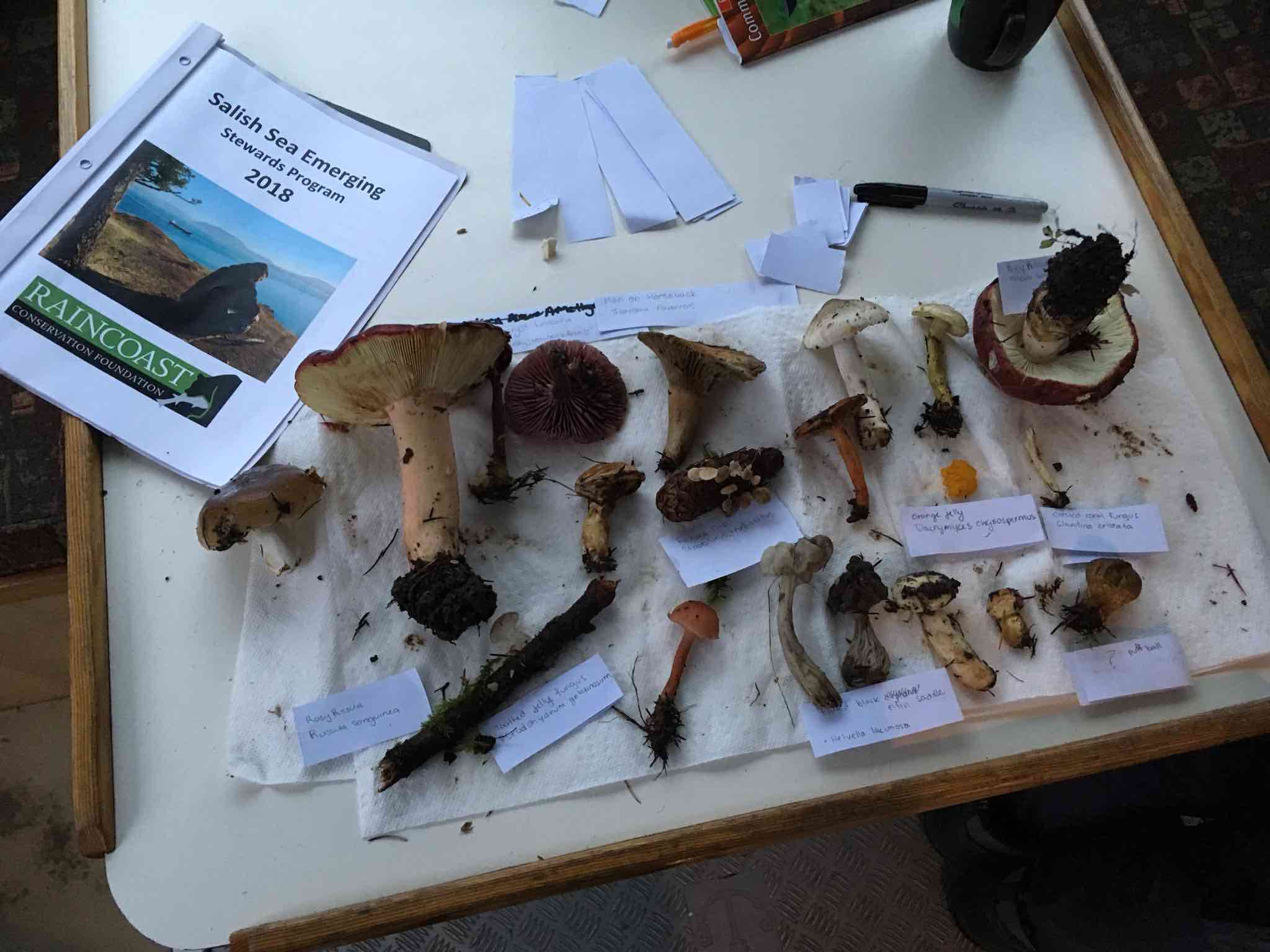 "A variety of fungi spread out on a wood and white table next to a brochure that reads ""Raincoast Conservation: Salish Sea Emerging Stewards."""